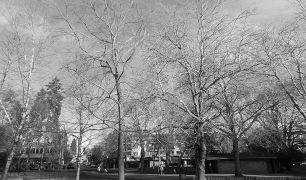 MD_GL_trees_ims_04