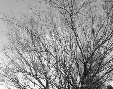 MD_GL_trees_ims_07