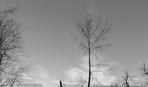 MD_GL_trees_ims_08