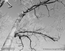 MD_GL_trees_ims_09
