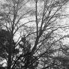 MD_GL_trees_ims_11
